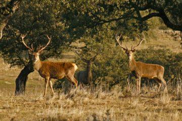 finca con ciervos espectaculares