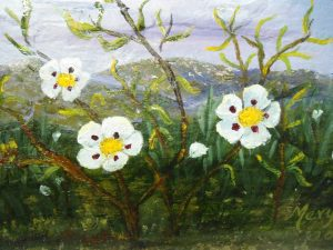 flor de jara cuadro